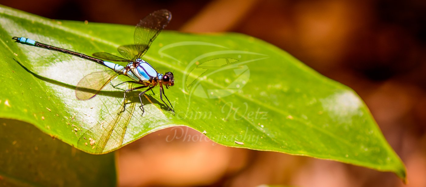 Dragonfly 0997